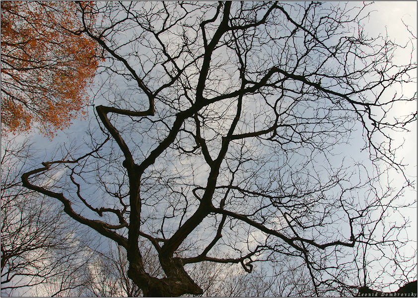 Осень голые деревья