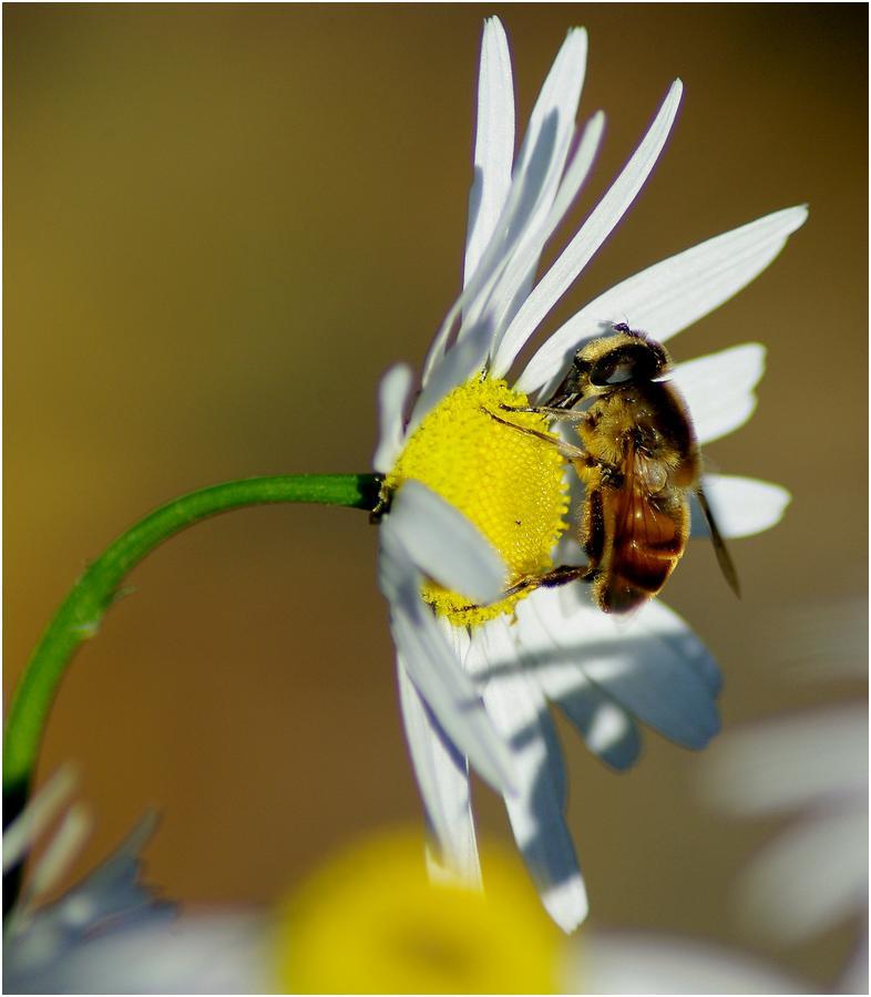 Сверхранние облеты пчел. скачать программу для взлома контакта на голоса.