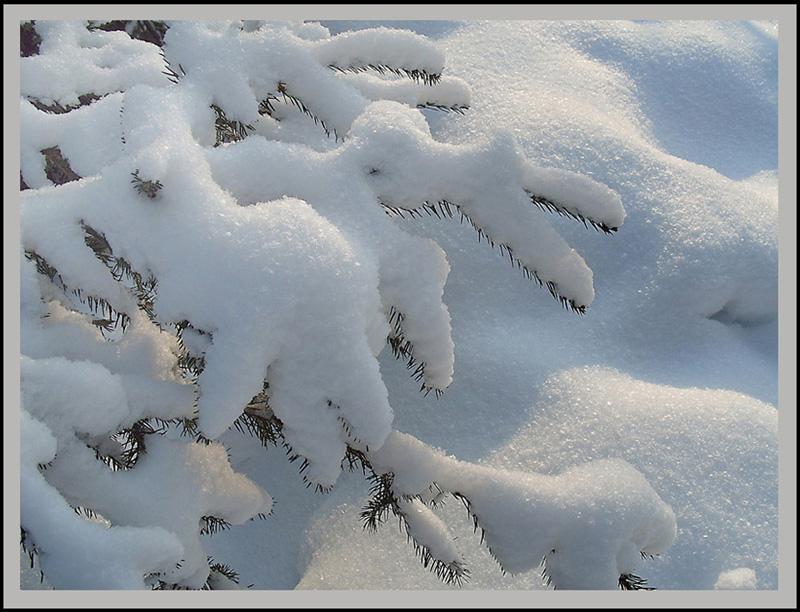 Картинки снег роса