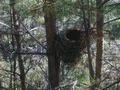 Фотография Гнездо кукушки photoline.ru.