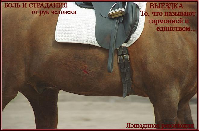 Жестокое отношение к лошадям